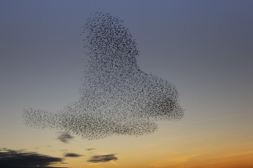 L'holacratie ou quand la transparence met en lumière les(in)compétences